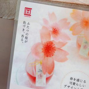 sakura_07.jpg